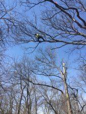 KTS Tree Climbing